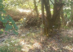 Birdseye Creek Rd